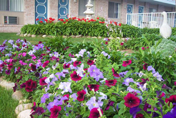 Mackinaw City American Boutique Inn Garden